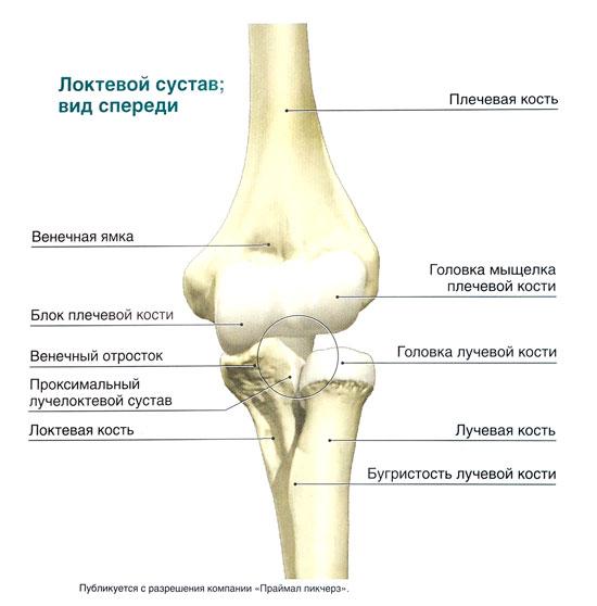 Правка костей суставов препараты для восстановнения суставов