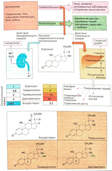 Глюкокортикостероиды в фармакологии пептиды или стероиды