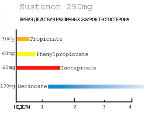 Время выведения сустанона сустанон 250 от пролактина