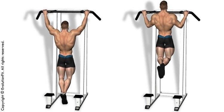 Схемы тренировки спины