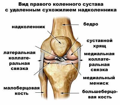 связок колена[править]