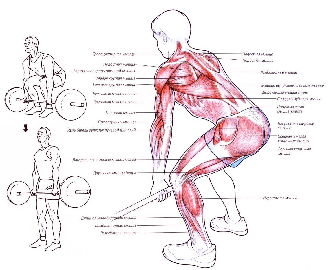Мышцы суставы при толчке штанги болят суставы рук какие анализы здавать
