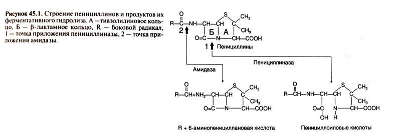 действия пенициллинов и