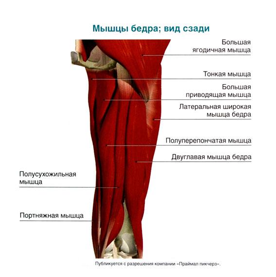 Разгибание в коленном суставе осуществляется где взять деньги на операцию по замене сустава