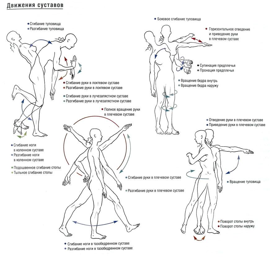 мой сустав упражнения шея