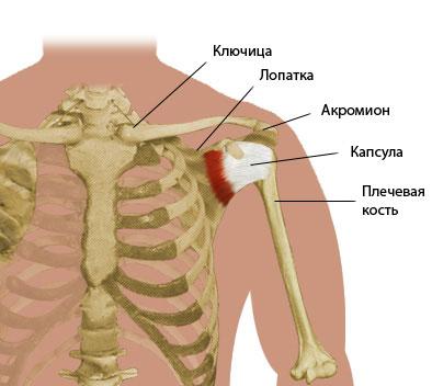 Упражнения для закачки плечевого сустава после растяжения медикаментозное лечение артрита голеностопного сустава