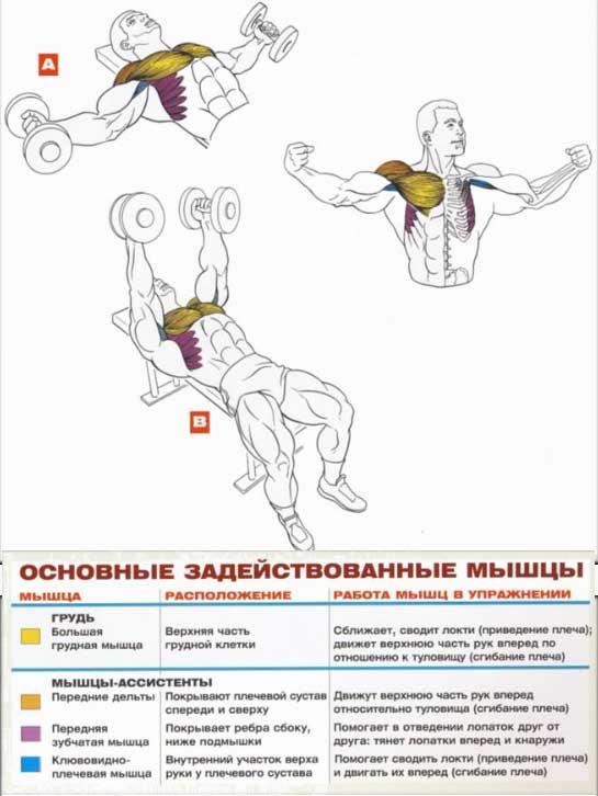 Схемы упражнений для мышц 8