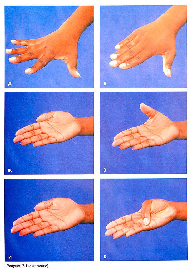 Палец Большой Кисти