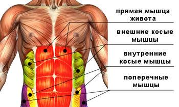 макдональд диетолог