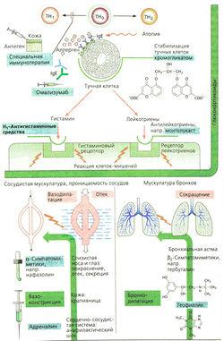 препараты от аллергии на пыльцу нового поколения