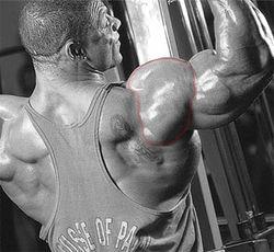 Тренировка мышц плеч