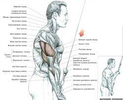Трицепс упражнение